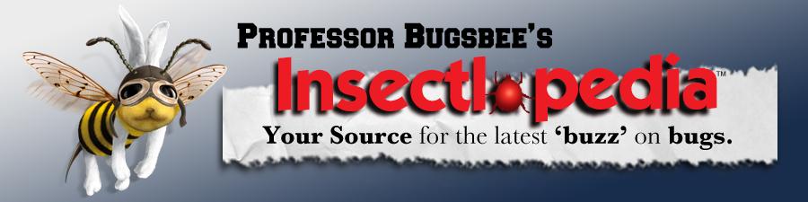 After Bite Bug Blog Insectlopedia